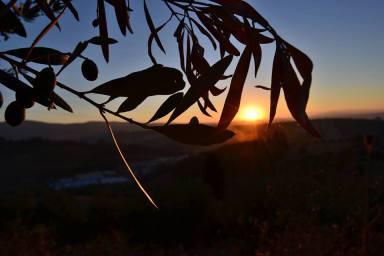 oliwkowy zachód słońca we włoszech